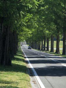 セコイヤ並木と一本道